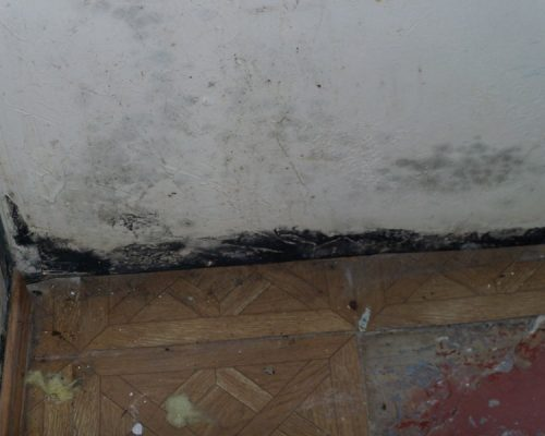 Black Mold is dangerous and unsightly.